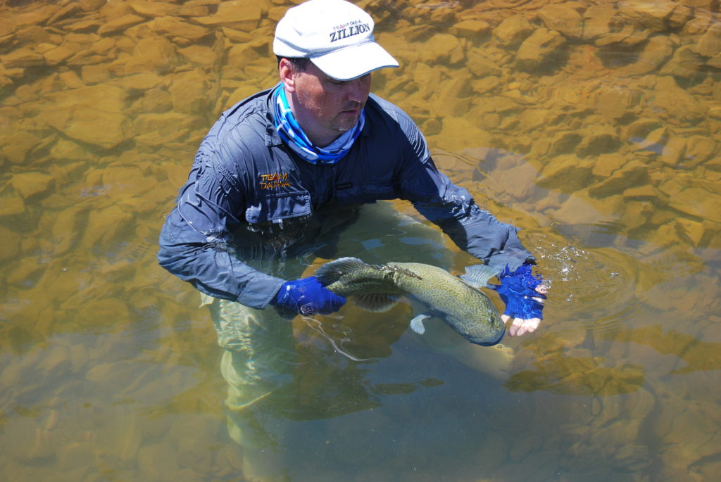Fisheries' Marc Ainsworth going to some trouble to safely relaese a nice cod.