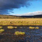 Eucumbene River